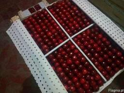 Cherry from sunnny Uzbekistan
