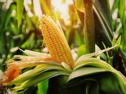 Экспорт пшеница кукуруза горошек ячмень просо мука