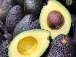 Fresh avocado for sale good price