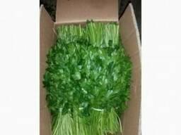 Fresh greens from Uzbekistan