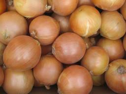 Fresh onion for sale good grade