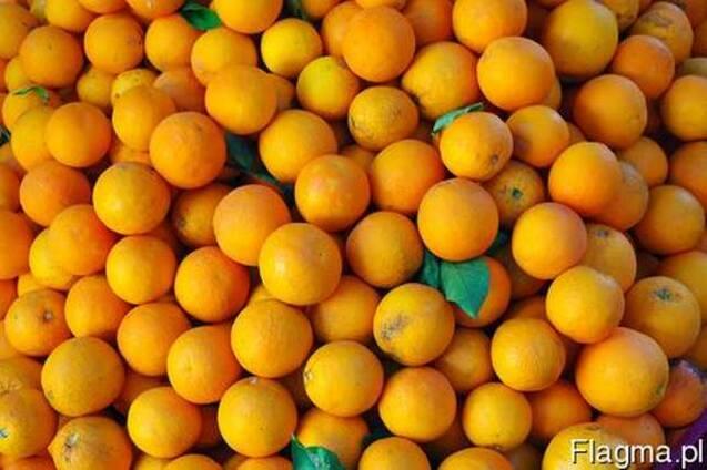 Фрукты из Европы логистические решения Апельсин