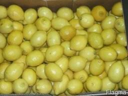 Фрукты из Европы логистические решения Лимоны