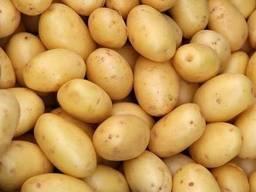 Irist potatoe