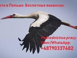 Ищу рекрутеров из Украины, Беларуси, Молдовы, Грузии
