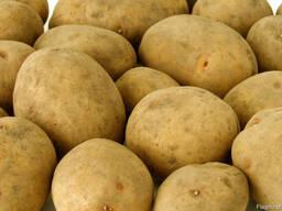 Картофель семенной из Беларуси. Доставка по всей Польше.