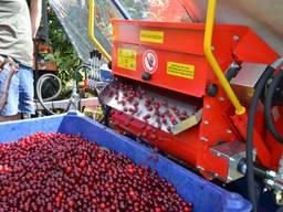 Комбайн для сбора вишни и слив GACEK