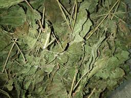 Лекарственные травы - photo 8