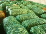 Огурцы грунтовые урожая 2018 - фото 2
