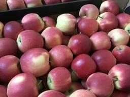 Первосортные свежие яблоки разных сортов, урожая 2017 г.