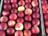 Польские яблоки, Клубника