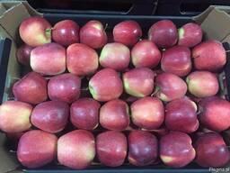 Поставки яблок из Польши - фото 2