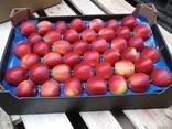 Продам яблоко Гала Маст - фото 1