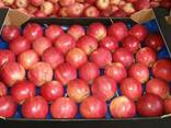 Продам яблоко Гала Маст - фото 3