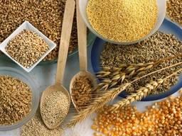 Продам зерно в Польше