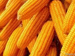 Пшеница Кукуруза Соя экспорт