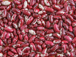 Quality 3D beans from Kyrgyzstan - фото 2