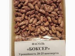 Quality 3D beans from Kyrgyzstan - фото 5