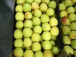 Свежие польские яблоки 2018 - фото 5
