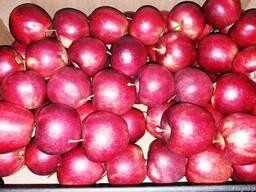Свежие яблоки, сливы, груши и овощи из Польши