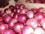 Свежие яблоки, сливы, груши и овощи из Польши, фото 4