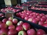 Свежие яблоки, сливы, груши и овощи из Польши, фото 5