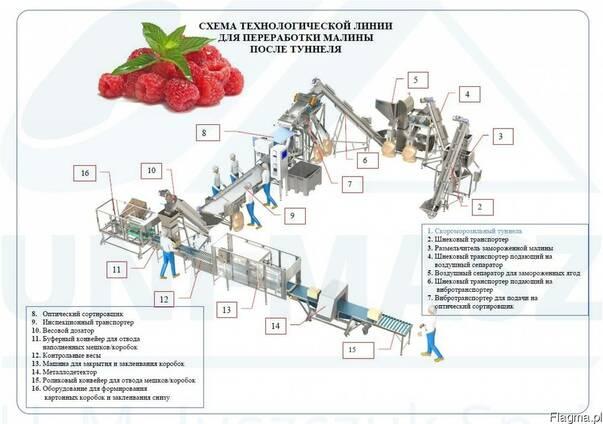 Технологическая линия для переработки малины - грис