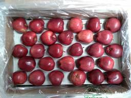 Яблоки Гала, Рэд Чиф, Голден